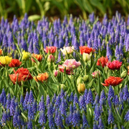 Дистанционный курс «Ландшафтный дизайн и садоводство»