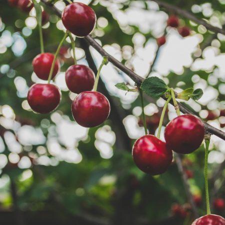 Дистанционный курс «Садоводство»