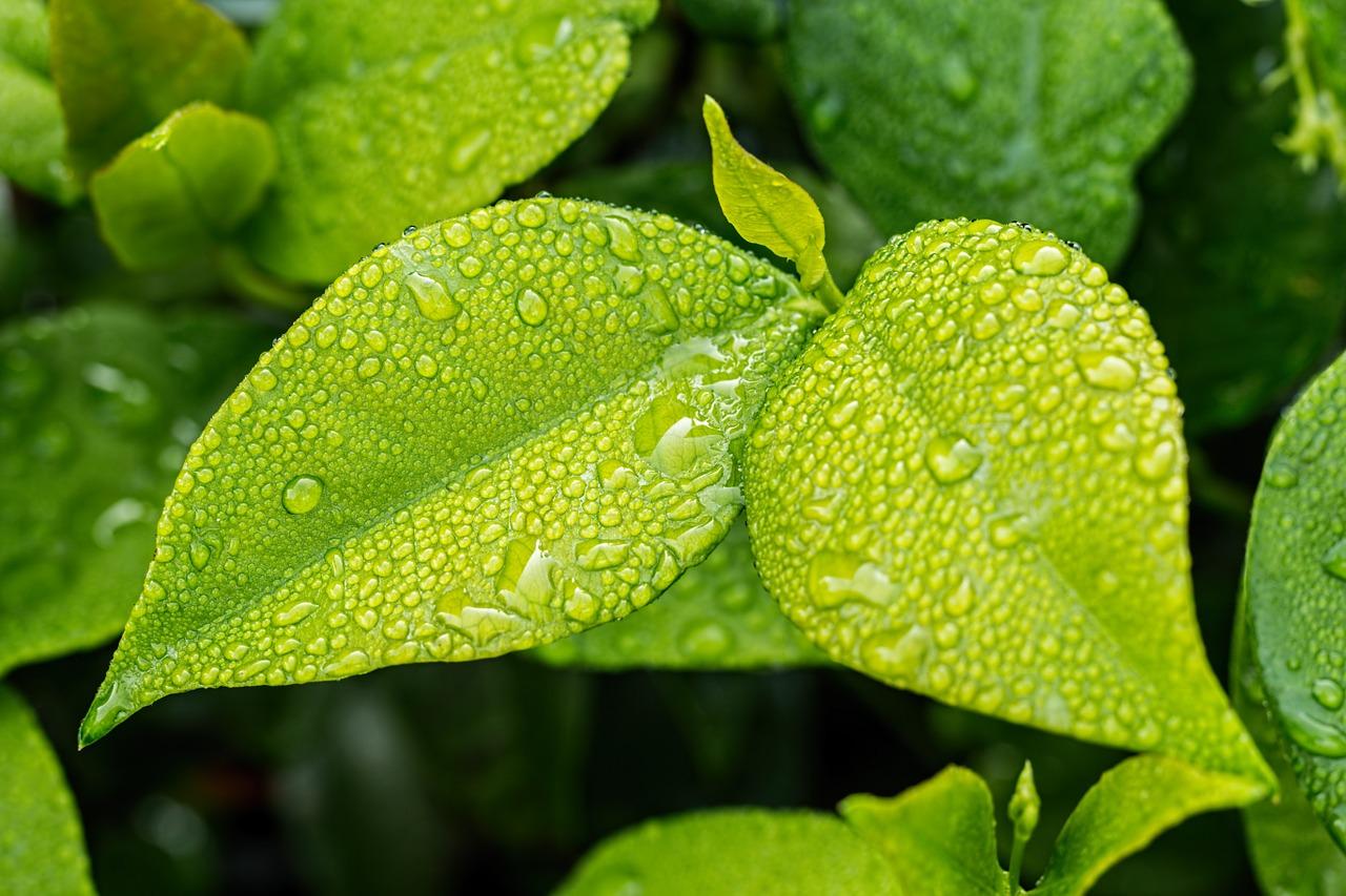 leaf-1001679_1280